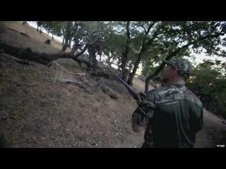 California Black Tail Deer