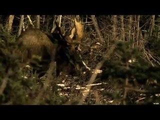 Moose Hunting In Newfoundland