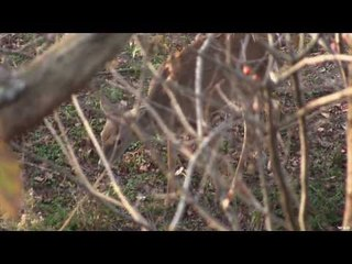 Deer Hunting in Kansas with Muzzle Loader