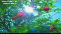 Fatih Erkoç   Mutlu İnekler Şarkısı - Sütaş Reklamı (2002)