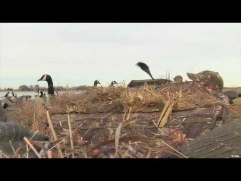 Hunting Canadian Geese