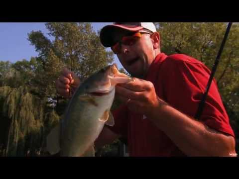 Largemouth Bass Fishing in Weeds