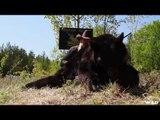 Hunting Black Bear in Saskatchewan