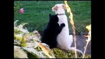 Funny Cats Compilation [Most See] Funny Cats Videos Ever