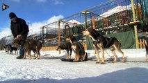Les chiens de traîneaux, pour découvrir la montagne autrement