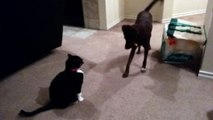 Dog tries to play with cat and fails