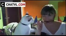 Funny Animals | Cat | Cute cat | Videos Compilation 2015 | Funny Prank | Humor | Funniest