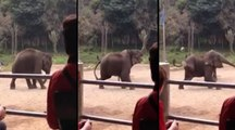 There's Lionel Messi And There's This Elephant