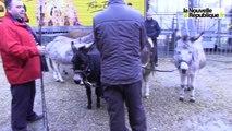 VIDEO. Tours : dans les coulisses du cirque Pinder