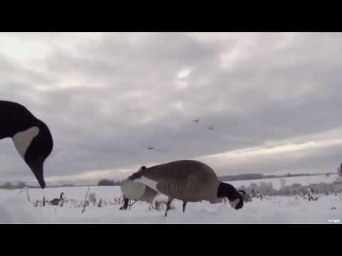 Ontario Geese Hunting