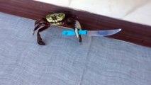 Knife-Wielding Crab looks very threatening!