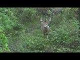 Deer Hunting in the Early Season