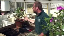 Mygrove: Growing cuttings from plants
