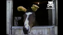 Horse has human hands for ears!