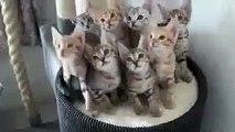 Котята зажигают под музыку