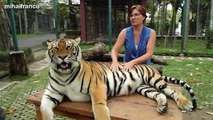 Lions, Tigers And Cheetahs Also Like Cuddling Big Cats Compilation