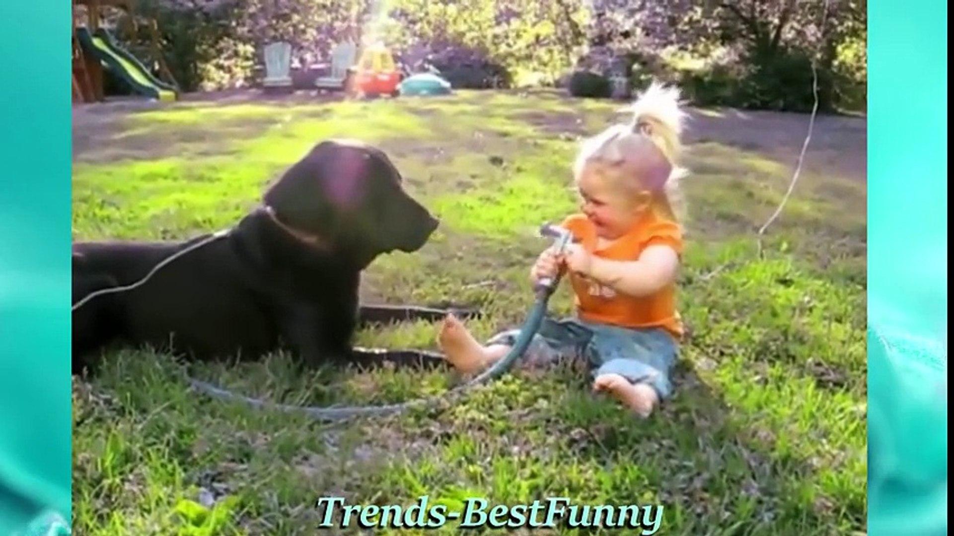 Cute Animals - Funny Videos (Cute Videos Compilation )