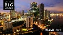 Miami Mice (Time lapse - Tilt Shift - 4k)