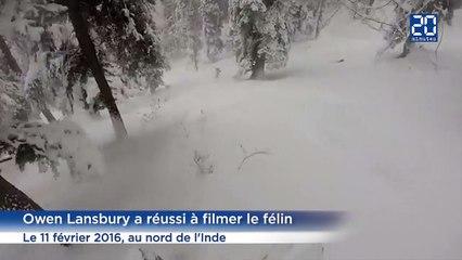 Des skieurs rencontrent par hasard un léopard des neiges