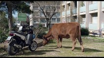 La Vache - Bande annonce