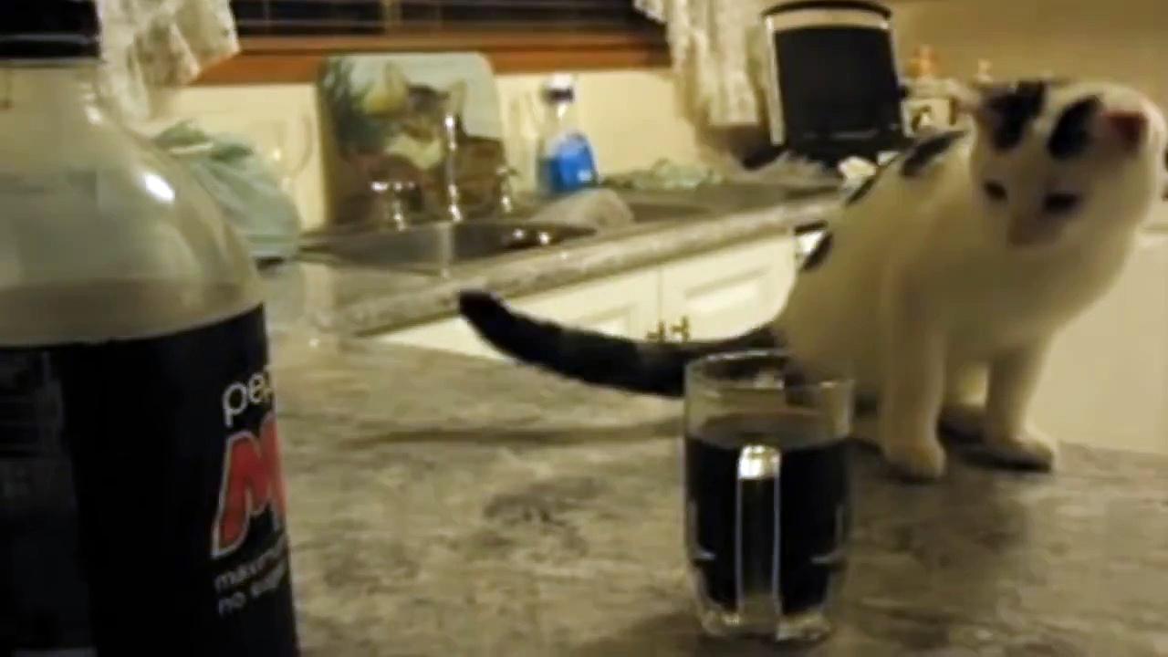 Cat Knocks Over Mug