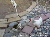 Baston entre deux chaud lapin réglé par les poulets