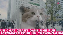 Un chat géant dans une pub japonaise pour un chewing-gum ! À découvrir maintenant dans la minute chat #132