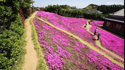 Il giardino dell'Eden in Giappone
