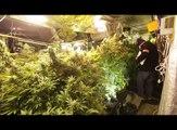 4000 plants de cannabis découverts à Hem