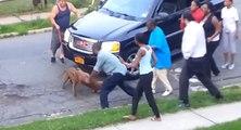 Etats-Unis : un pitbull attaque un autre pitbull à la gorge