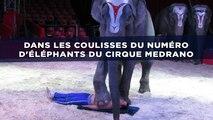 Dans les coulisses du numéro d'éléphants du cirque Medrano