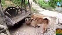 Dog vs Monkey Fight,Dog vs Monkey Real Fight