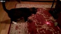 OMG: Cats vs. Laser Pointer HD funny movies april fools pranks college funny april fools j