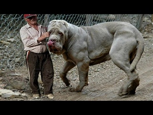 Top 10 Strongest Dogs In The World Video Dailymotion