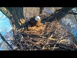 DECORAH EAGLES  1/18/2016  10:36 AM  CST   MOM FIRST AND THEN dAD WITH A STICK