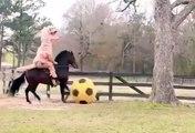 Faustino Asprilla apprend à son cheval à jouer au foot