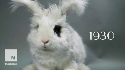 100 years of bunny beauty: Playboy's got nothing on these heart-thumps