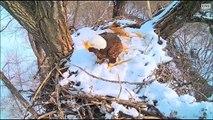 DECORAH EAGLES  2/4/2016  11:18 AM  CST   DAD WITH A STICK