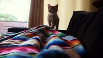 CAT - FUNNY VIDEOS Try Not To Laugh - These Funny Cats Will Make You Laugh!