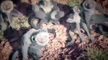 Dessins animés pour les petits enfants en français 2015 - Dinosaure film complet en francais