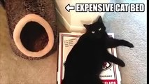 Cat Logic ! Cats do what they want ! Funny Videos 2015