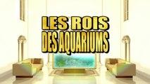 Les rois des aquariums - L'aquarium de requins