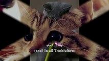 Romantic arabic nasheed {Eng subtitles}    Amana  + remix