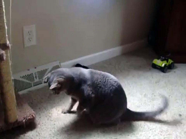 Cute Cat Video