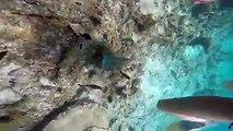Dominican Snorkling