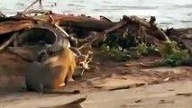 Lion vs Leopard vs Crocodile / National Geographic Documentary / BBC Documentary / Animal