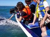 Sortie baleines grises