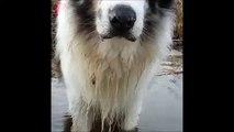 Bubble dog - Le chien qui fait des bulles