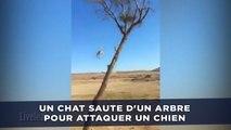 Un chat saute d'un arbre pour attaquer un chien