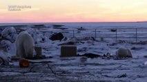 Nature : Ces deux ours polaires se rencontrent pour la première fois (et ça a tout de suite collé) !